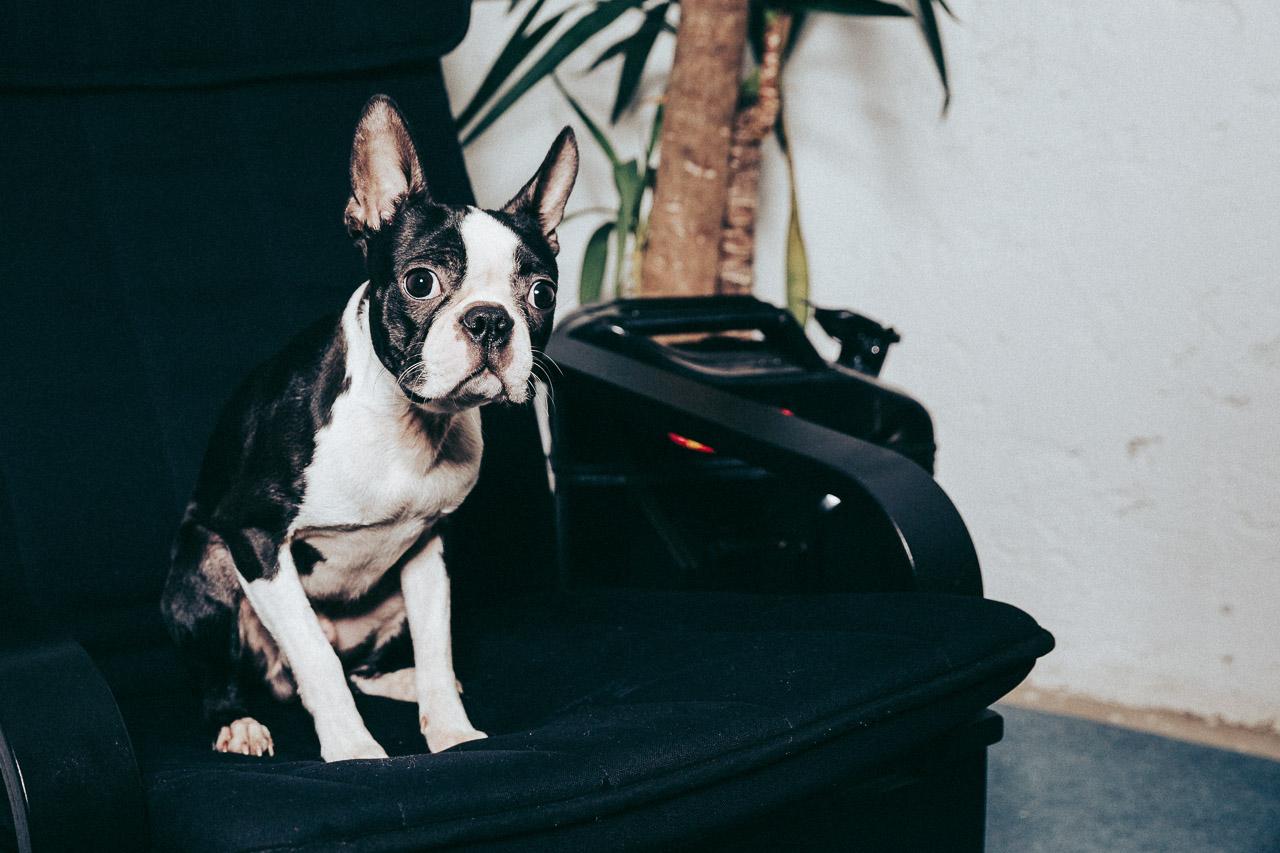 Ferdinand der Bürohund